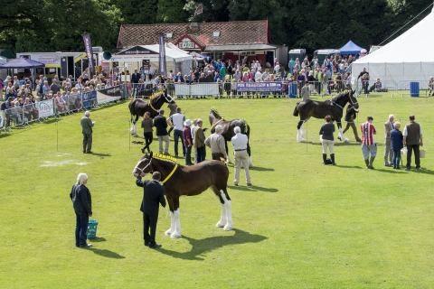 Ashbourne Shire Horse Society - Membership Scheme