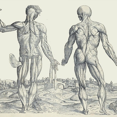 Night at the Museum of Anatomy - The Evolution of Anatomical Education